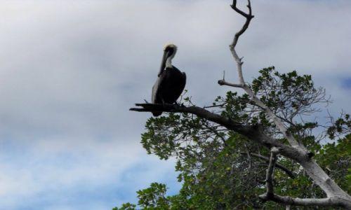 Zdjęcie WENEZUELA / Margarita  /laguna / rezerwat / La Restinga