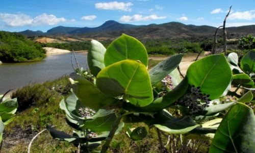 Zdjecie WENEZUELA / -Margarita/La Restinga / w drodze na dzikie plaże / La Restinga
