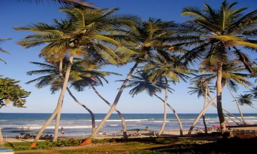 Zdjecie WENEZUELA / Margarita / El Tirano / palmowe wybrzeże