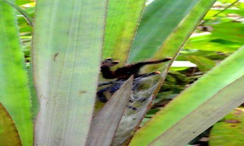 Zdjecie WENEZUELA / Orinoco / Delta Orinoco / Zwierzęta Wenezueli