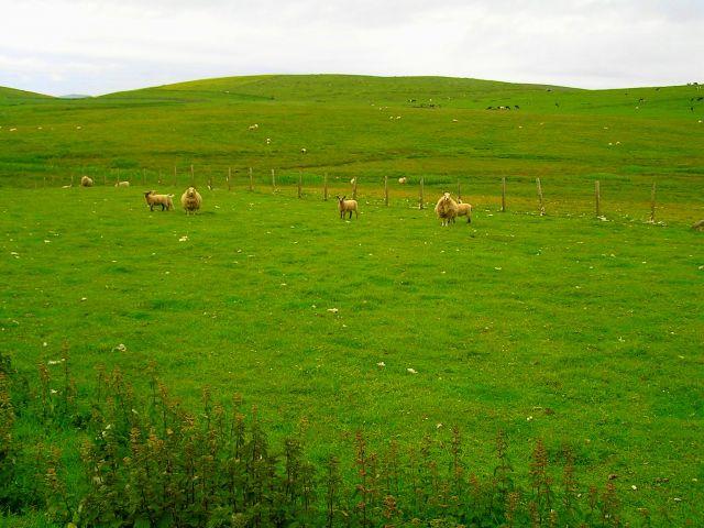 Zdjęcia: Szetlandy, Szkocja, Szetlandzki pejzaż., WIELKA BRYTANIA