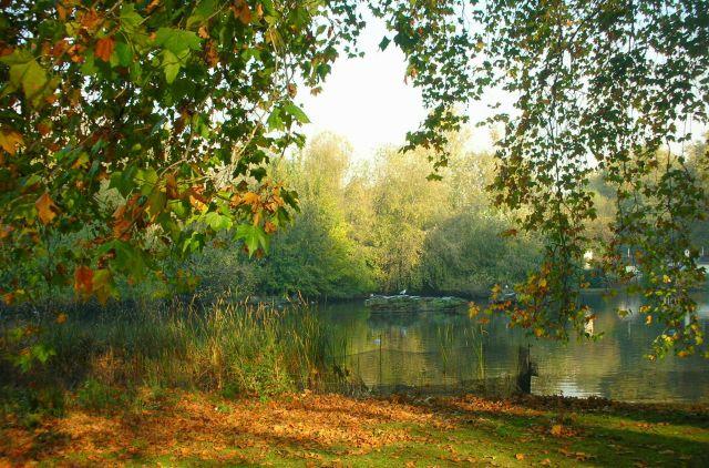 Zdj�cia: park w Londynie, jesien w parku.., WIELKA BRYTANIA