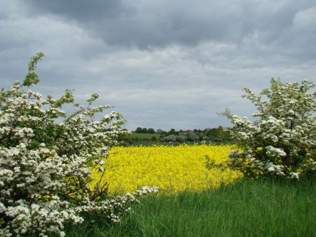 Zdj�cia: okolice  Dewsbury, West-Yorkshire, kwieciscie sie zrobilo, WIELKA BRYTANIA