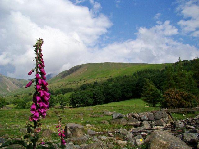 Zdjęcia: Wasdale Head, Lake District/ Cumbria, dzwonek jak - Filip z konopi, WIELKA BRYTANIA