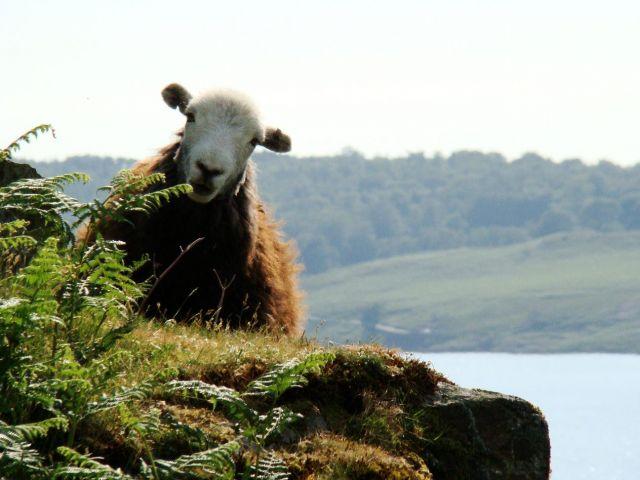 Zdjęcia: Wast water, Cumbria / Lake District, a o co sie rozchodzi ?, WIELKA BRYTANIA