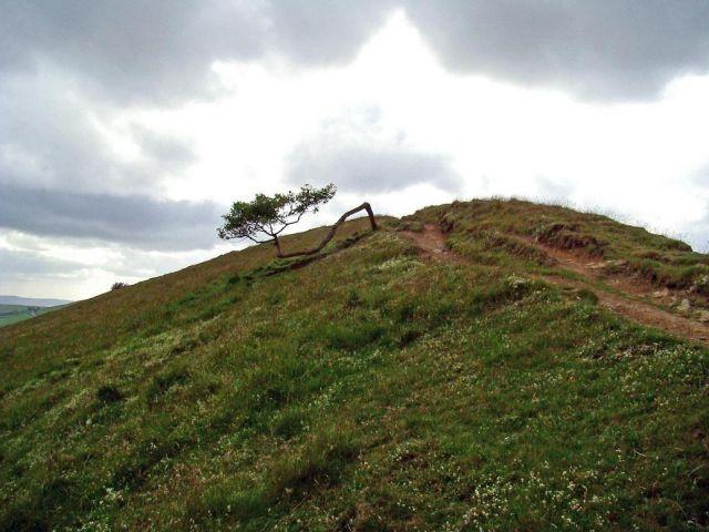 Zdjęcia: okolice Castelton, Derbyshire, wytrwale drzewko  (slonca jak na lekarstwo ), WIELKA BRYTANIA