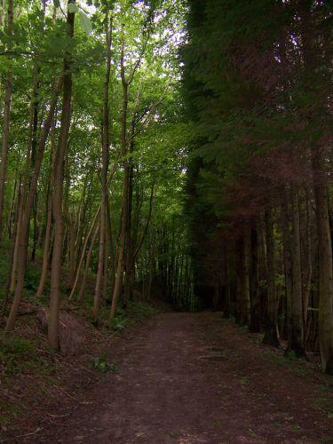 Zdjęcia: nieopodal Cirencester, Glocestershire, Droga w lesie...., WIELKA BRYTANIA
