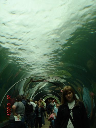 Zdjęcia: Colcester, Anglia, Pod  woda, WIELKA BRYTANIA