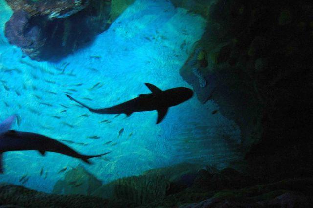 Zdj�cia: brighton, rekiny, WIELKA BRYTANIA