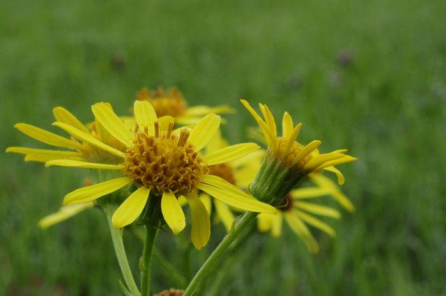 Zdjęcia: łączka, West sussex, Flower, WIELKA BRYTANIA