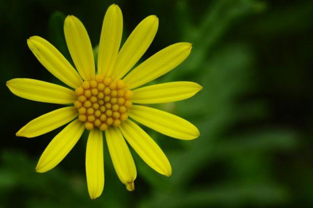 Zdjęcia: łączka, West sussex, Flower 2, WIELKA BRYTANIA