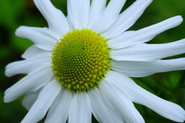 Zdjęcia: łączka, West sussex, Flower 3, WIELKA BRYTANIA