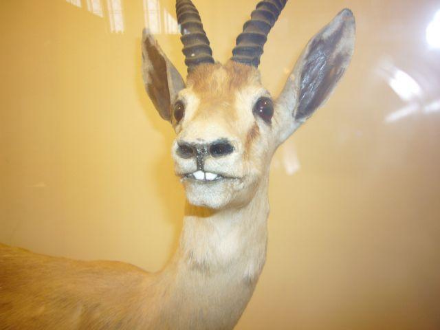 Zdjęcia: london museum, zwierzat, Museum, WIELKA BRYTANIA