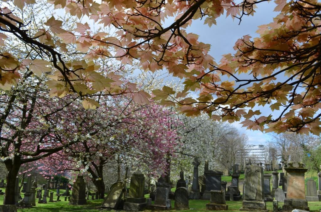 Zdjęcia: Glasgow, Szkocja, Kwitnące Necropolis, WIELKA BRYTANIA