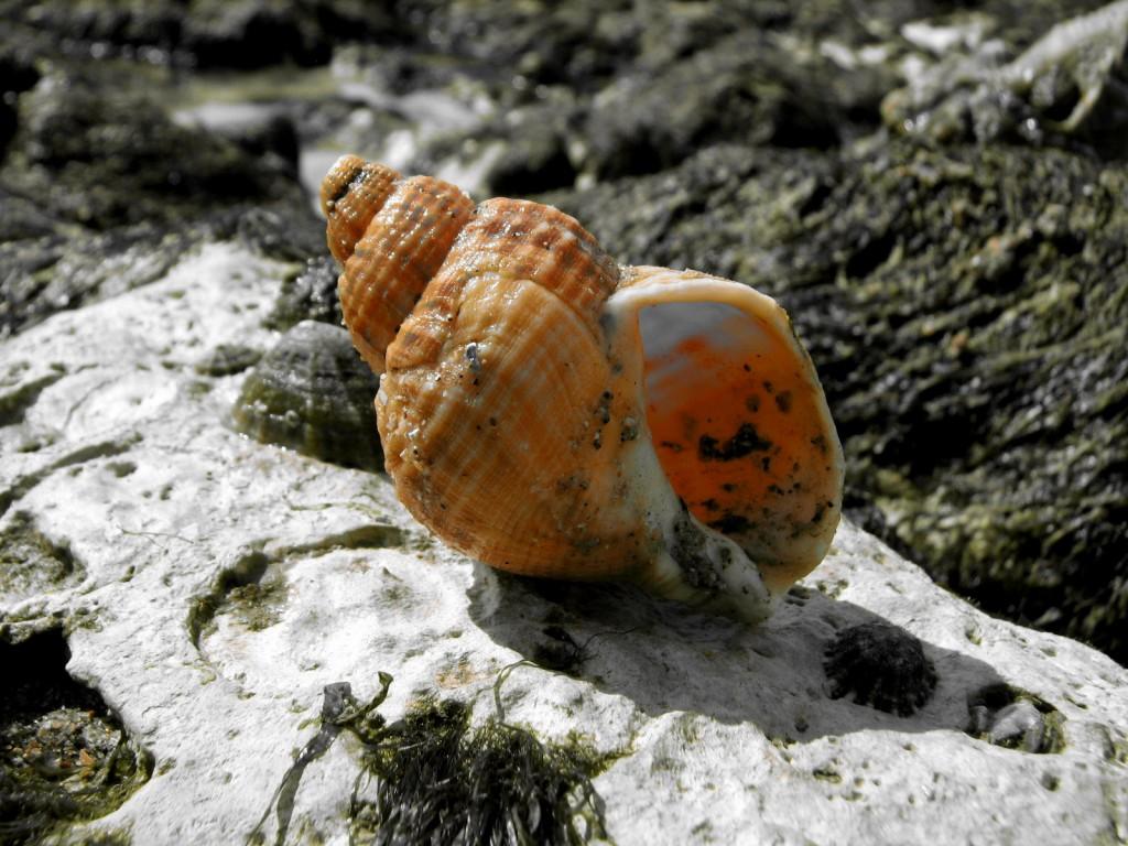 Zdjęcia: Beachy Head, hrabstwo East Sussex, Muszla, WIELKA BRYTANIA