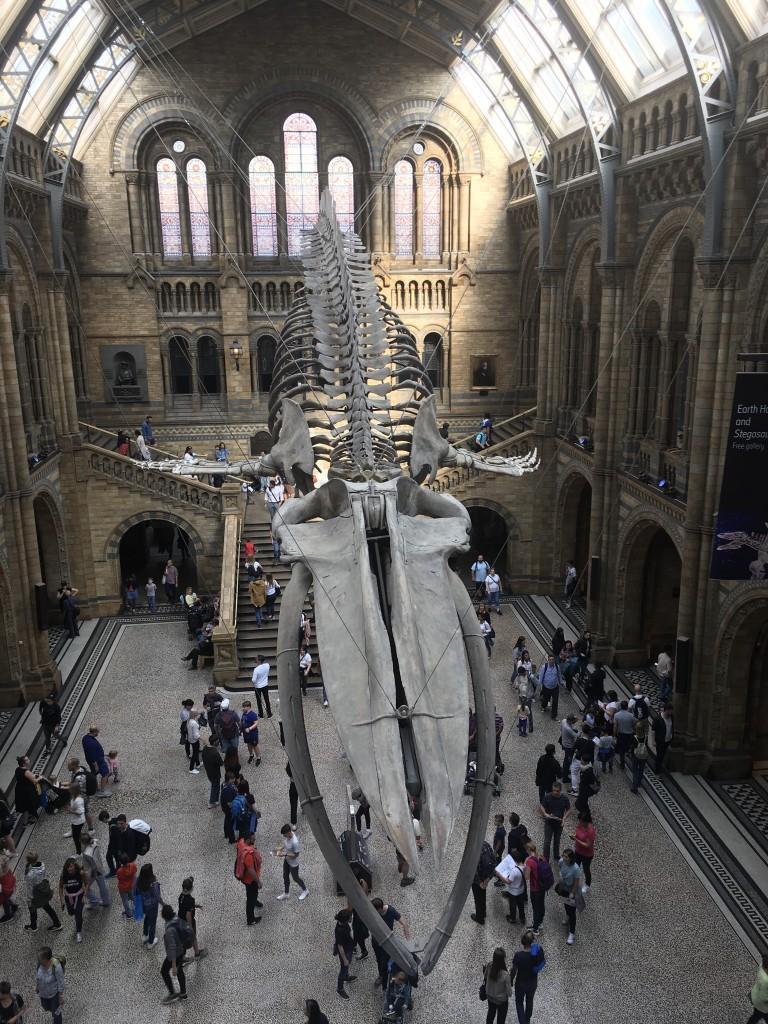 Zdjęcia: Londyn , Londyn , Muzeum Historii Naturalnej , WIELKA BRYTANIA
