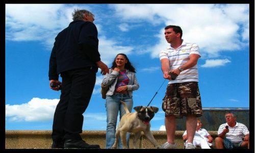 Zdjecie WIELKA BRYTANIA / - / Brighton / Psy wyprowadzac tylko na smyczy!
