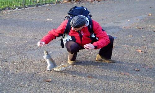 Zdjęcie WIELKA BRYTANIA / London / Central Park London / Mam orzeszka