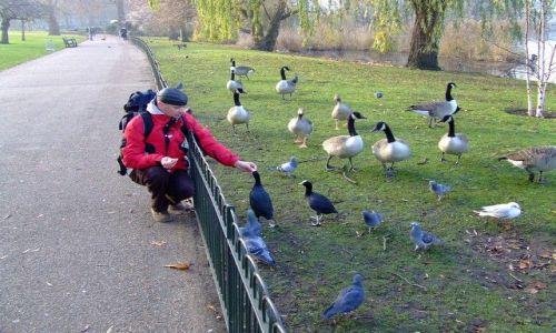 Zdjęcie WIELKA BRYTANIA / London / Central Park London / Central Park in London