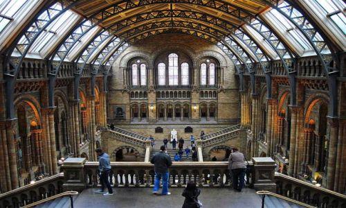 Zdjęcie WIELKA BRYTANIA / LONDYN / LONDYN / MUZEUM HISTORII NATURALNEJ