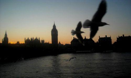 Zdjecie WIELKA BRYTANIA / - / Londyn / Wieczorem nad Tamizą..