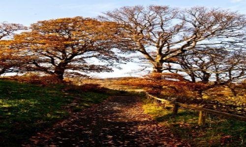 Zdjecie WIELKA BRYTANIA / Lake District / Lake District / Jesień