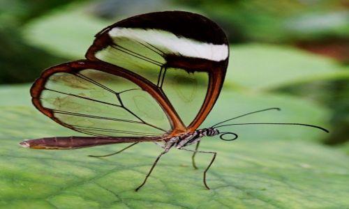 Zdjecie WIELKA BRYTANIA / Szkocja / Butterfly & Insect World Edinburgh / Konkurs-Przyroda w skali makro-motylek
