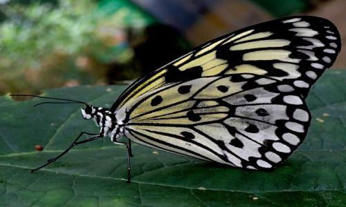 Zdjecie WIELKA BRYTANIA / Szkocja / Butterfly  / motylek3