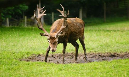 Zdjęcie WIELKA BRYTANIA / Szkocja / Cairngorms National Park / KONKURS