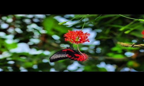 Zdjecie WIELKA BRYTANIA / Londyn Zoo / Londyn / Motyl