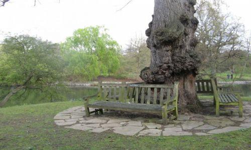 Zdjecie WIELKA BRYTANIA / Londyn / Krolewskie Ogrody w Richmond  / Gosciu siadz pod mym drzewem...