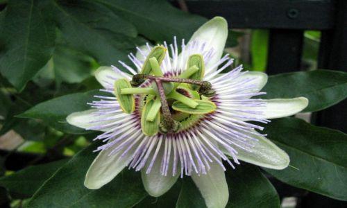 Zdjęcie WIELKA BRYTANIA / Szkocja / Inverness - ogród botaniczny / Skomplikowana natura - KONKURS