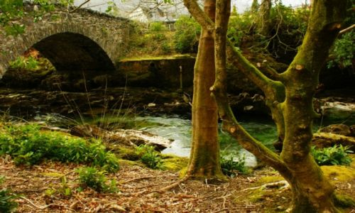 Zdjęcie WIELKA BRYTANIA / Szkocja / Glencoe / Zieleń
