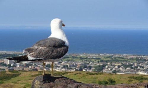 Zdjęcie WIELKA BRYTANIA / Szkocja / Edynburg / Widok na miasto z wygasłego wulkanu Arthur's Seat