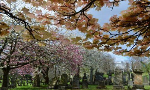 Zdjęcie WIELKA BRYTANIA / Szkocja / Glasgow / Kwitnące Necropolis