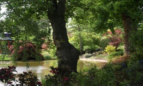 Zdjecie WIELKA BRYTANIA / południowa Anglia / na przedmieściach Londynu / w parku nad stawem