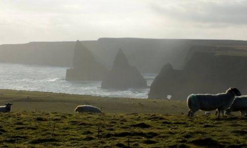 Zdjęcie WIELKA BRYTANIA / Szkocja / Morze Północne / owce też mają piękne widoki...