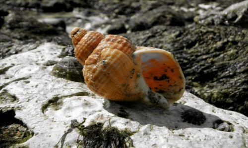 Zdjęcie WIELKA BRYTANIA / hrabstwo East Sussex / Beachy Head / Muszla