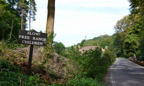 Zdjecie WIELKA BRYTANIA / -Somerset / polna droga / gatunki zwierząt w Angli