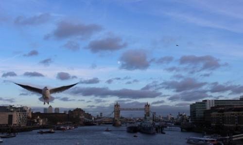 Zdjecie WIELKA BRYTANIA / - / Londyn / Londynowo-mewowo