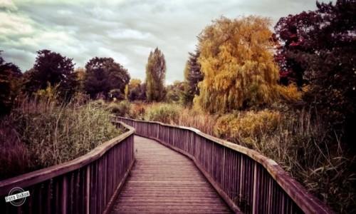 Zdjęcie WIELKA BRYTANIA / - / London / Dulwich Park