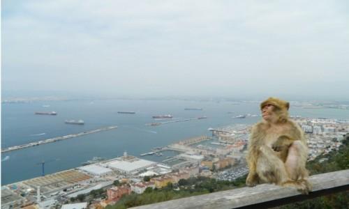 Zdjecie WIELKA BRYTANIA / Półwysep Iberyjski. / Skała Gibraltarska. / Gibraltar.