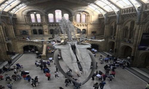 Zdjecie WIELKA BRYTANIA / Londyn  / Londyn  / Muzeum Historii Naturalnej