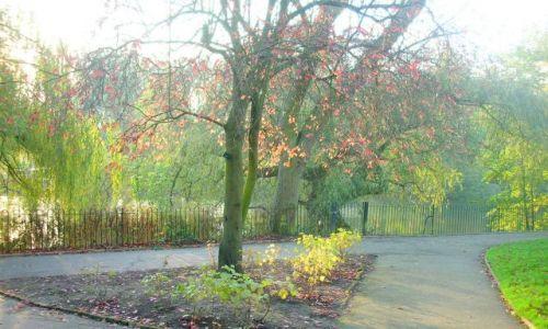 Zdjęcie WIELKA BRYTANIA / brak / LONDYN  / jesien w parku