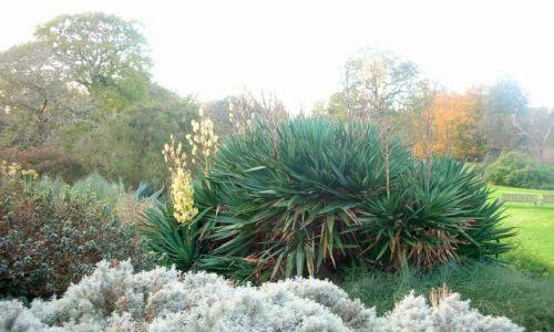 Zdjecie WIELKA BRYTANIA / brak / Londyn-Kew Gardens / jesien w Kew Ga