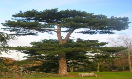 Zdjecie WIELKA BRYTANIA / brak / Londyn-Kew Gardens / jesien w Kew Gardens