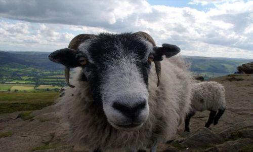 Zdjecie WIELKA BRYTANIA / Yorkshire / okolice Shefield / tubylec