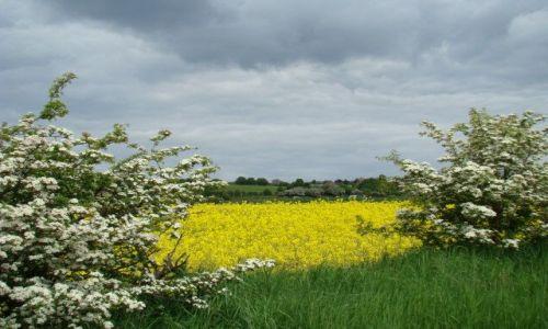 Zdjecie WIELKA BRYTANIA / West-Yorkshire / okolice  Dewsbury / kwieciscie sie zrobilo