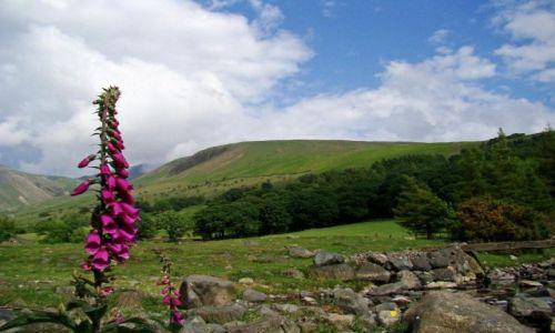 Zdjęcie WIELKA BRYTANIA / Lake District/ Cumbria / Wasdale Head / dzwonek jak - Filip z konopi