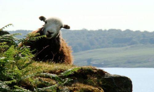 Zdjęcie WIELKA BRYTANIA / Cumbria / Lake District / Wast water / a o co sie rozchodzi ?